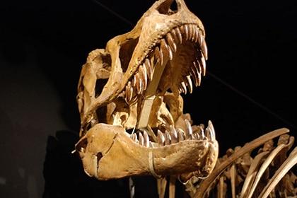 Tarbosaurus bataar.
