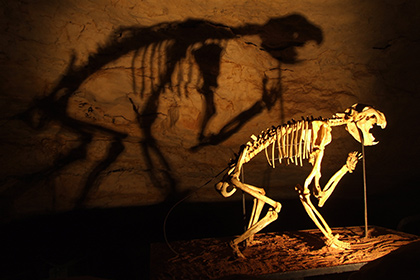 Thylacoleo (marsupial lion), South Australia.